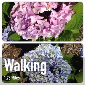 AM walk